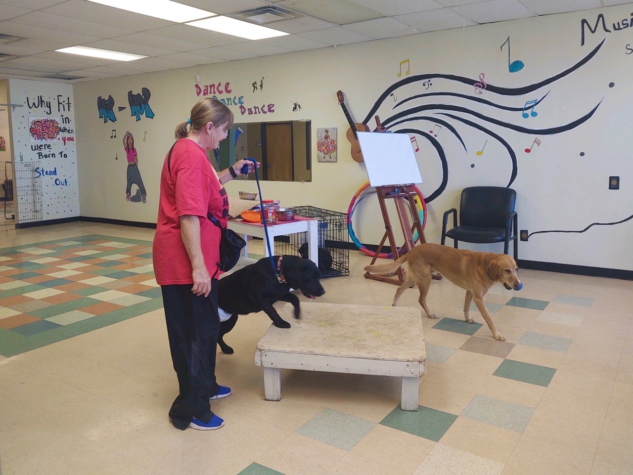 Our trainer, Dani, trains dogs at the Arts and Animals building. Dog training is one of the day services we offer over Zoom.
