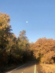sunlit-path-captured-on-a-run-by-rebecca-sanford